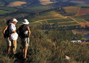 Enjoy a country-style Winelands sunset hike
