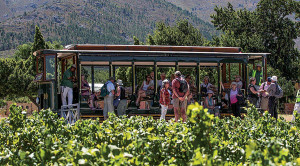 Discover the Cape Winelands this summer