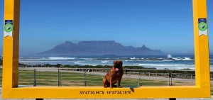 Puppy love for new Table Mountain picture frame