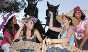Harvest time hijinks at Paarl Ommiberg festival