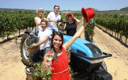Grape fun awaits at Ommiberg harvest festival