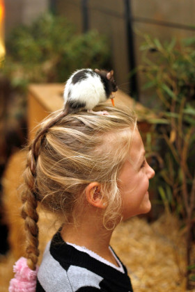 the-petting-zoo-should-be-hit-with-young-animal-lovers