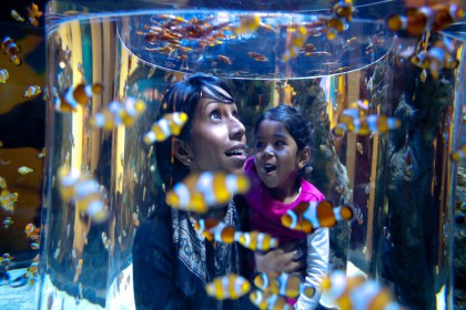 Festive Season Gift idea from the Two Oceans Aquarium