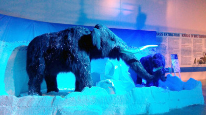"""Cool"" creatures drop in for an Ice Adventure at Canal Walk"