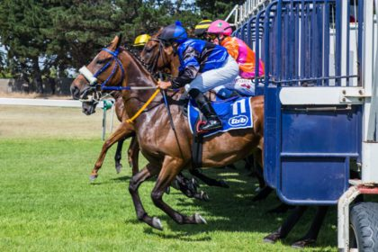 Horses For Causes charity race day to benefit local charities