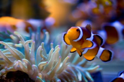 Two Oceans Aquarium Easter Holiday programme