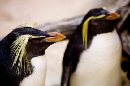 The stars at the Two Oceans Aquarium in Cape Town have to be the penguins.