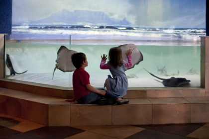 Two Oceans Aquarium a must for all ages