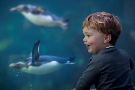 Kids always have a great time at the Two Oceans Aquarium.